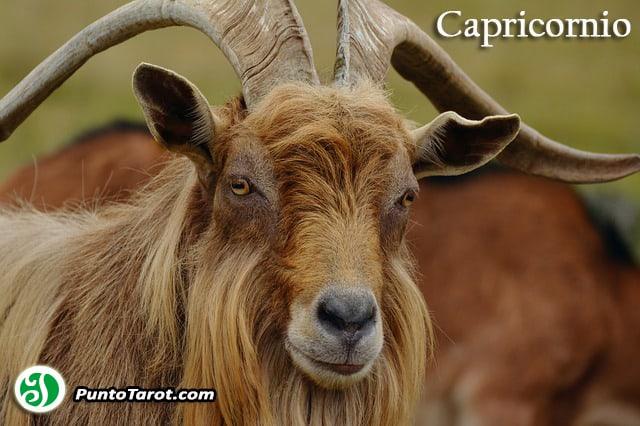 billy-goat-1698303_640