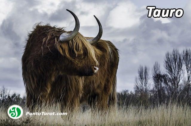 cow-1567006_640
