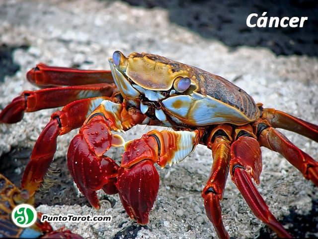 crab-298346_640