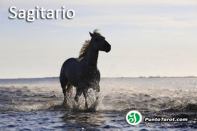 horse-1401914_640