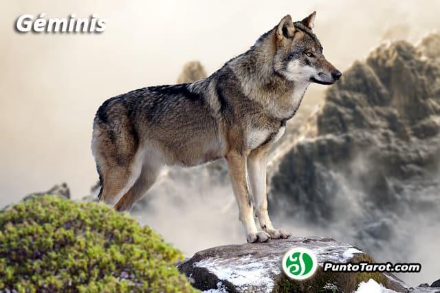 wolf-2362004_640